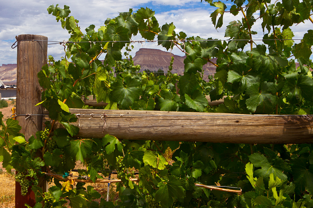 CO mountain through vines